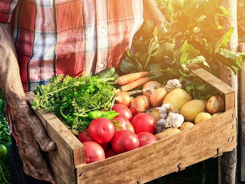 Продовольственная безопасность и питание в мире 2019 — Новости — Центр  компетенций по взаимодействию с международными организациями — Национальный  исследовательский университет «Высшая школа экономики»